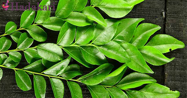 Eat more curry leaves to get rid of these diseases