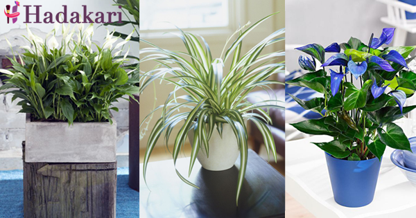 Indoor plants that cleans air inside your house