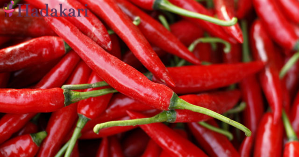 Chilli and pepper slow down the development of lung cancer