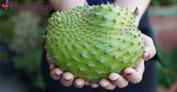 Soursop a solution for so many diseases